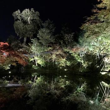 2018年 2泊3日の大阪&京都旅行!②~京都・高台寺ライトアップ編~