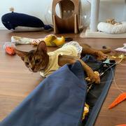 猫たちのおもちゃの整理 難航