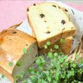 朝の定番♪ベーシックな黒糖ブドウパン