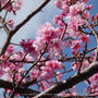 ✿ 桜便り ✿