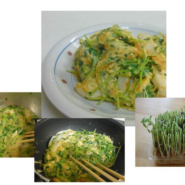 栄養価の高い豆苗そして・・・・又収穫 卵炒め