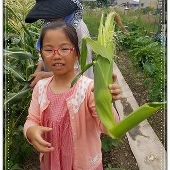 野菜の収穫と賑やかご飯
