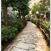 さかなや新宿へ行く <Part1 うだるような暑さと迷子>