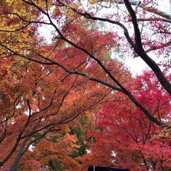 晩秋から初冬の日本_2019 ⑻ ー京都 ⑦ 東福寺・11月27日ー