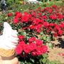 バラのフェスタでバラのアイスクリーム~♡