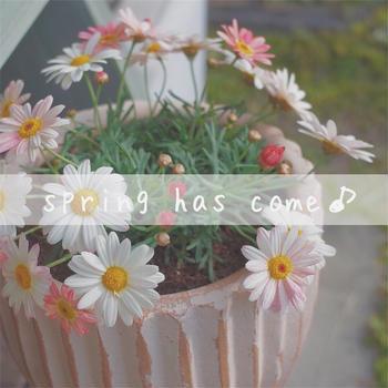 【ガーデニング】春のお花がかわいい♪