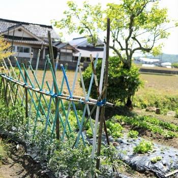 夏に向けて野菜を色々植えたよ!といただいたワラビを干したら・・・!?~トマト~