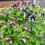 庭のお花と誕生日