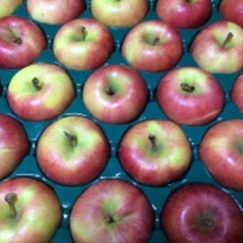 まぼろしの蜜入りりんご「高徳」