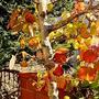 IVY家の秋〜紅葉真っ盛りです
