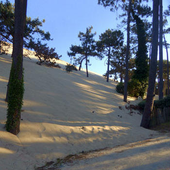 ヨーロッパ最大の砂丘+狸ガーデンの新入り君たち