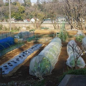 ■【Myファーム発】今色々と春野菜の準備に追われ 大忙しの毎日です^0^