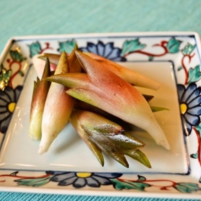 アメリカで育てる 日本の野菜 みょうがの収穫