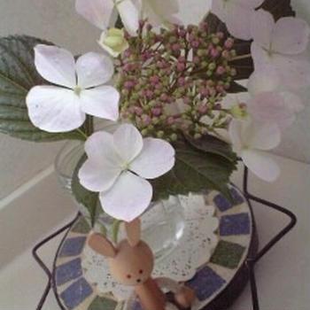 季節のお花☆あじさい