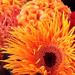 お花屋さんで見つけてほしいハロウィンにオススメの花材をいろいろご紹介♪<br><br>http://...