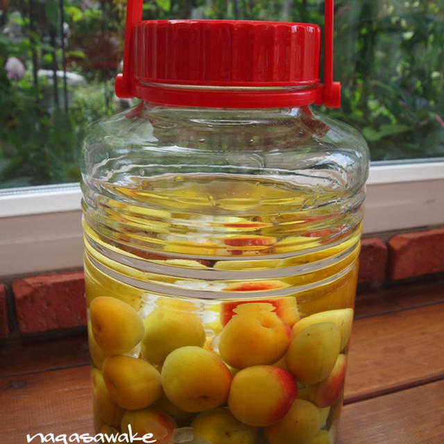 完熟梅で作る梅酒の作り方