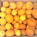 今日は冬至。柚子皮ジャムで作る柚子味噌ふろふき大根「捨てるものからパワー成分が蘇る」シリーズ♬