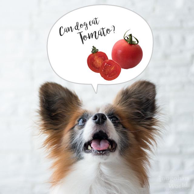 ■犬のダイエットにもOK!?&トマトの毒素のお話(All About 掲載)