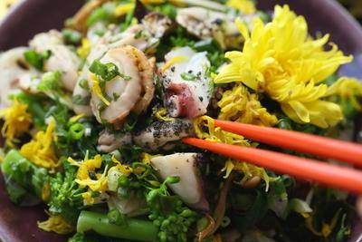 食用菊には栄養もあった!かざりで終わらせないレシピや効能を知ろう