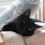 彼方を見つめて…わが家のお猫様