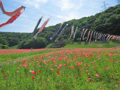 最近のこと【5月上旬~6月上旬】くりはま花の国、横須賀しょうぶ園、天神島、こびと捕獲作戦、お薦めレシピ