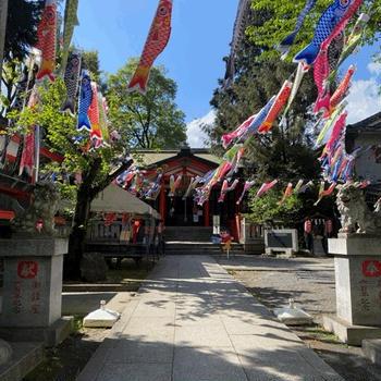 日曜は板橋区熊野町の熊野神社へ。こいのぼりを見に行ってきました。