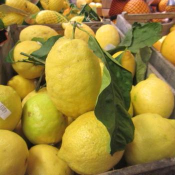 5月10日(月)、出演した『グレーテルのかまど』「名探偵コナンのレモンパイ」再放送です!