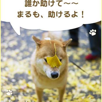 柴犬まるからの質問「最近「失敗」したことある?」