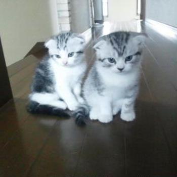 [猫ブログ] 待ってたの?