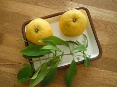 柑橘とレモンマートルのゼリー
