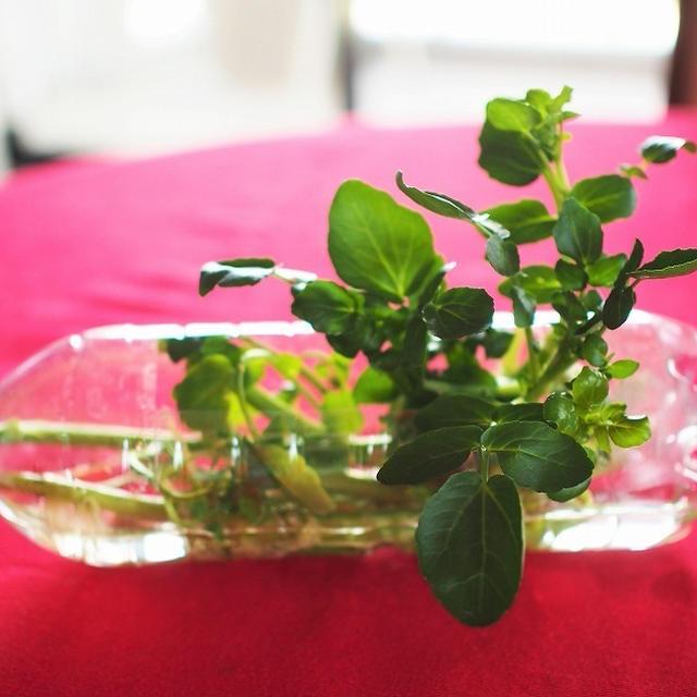 リボベジと小松菜の漬物
