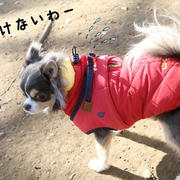 【犬】ドックランラン♪