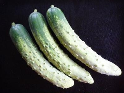 神奈川の伝統野菜 「相模半白」 キュウリです! 湘南茅ヶ崎家庭料理教室~GreenCooking-ABE