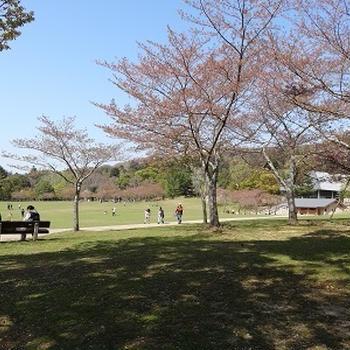 奈良公園へお散歩★【柿の葉寿司本舗たなか】筍づくし弁当