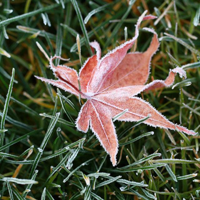 霜の降りた朝といぶりがっこと
