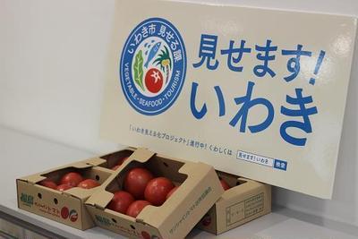 かな姐さんと一緒にいわき市のトマトをの美味しさを実感しよう♪