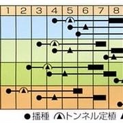 夏まき初冬採りカボチャ☆冬至カボチャ