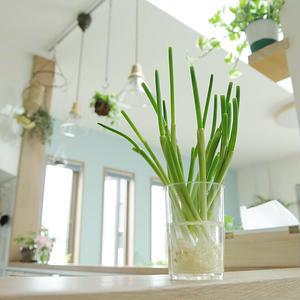 キッチンのムダをおしゃれに減らそう♪わが家の「リボベジ」自慢&リボベジ活用レシピ