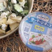 雪印北海道100カッテージチーズでサラダ(゚∀゚)