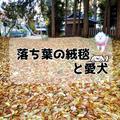 落ち葉の絨毯と愛犬