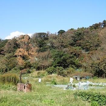 葉山農園(10月上旬)☆大根のコンパニオンプランツ