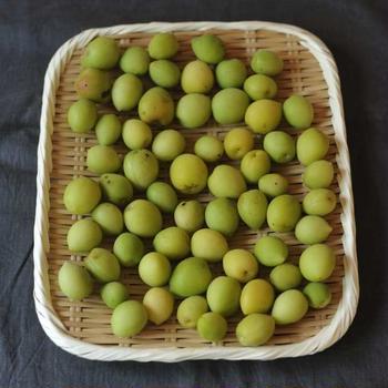 沖縄産の梅をみつけました!