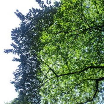 緑の色。空のいろ。