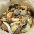【旨魚料理】マゾイのカルトッチョ