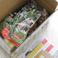 九州産のお野菜をシンプルに頂く