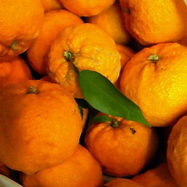 柚子の蜂蜜チーズケーキ