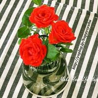 ミニ薔薇とフローラ&ラストポチ報告☆