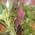 緑の野菜ゴマ和え。(レシピ) by いっちゃん♪さん