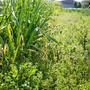 草原のような畑に憧れて