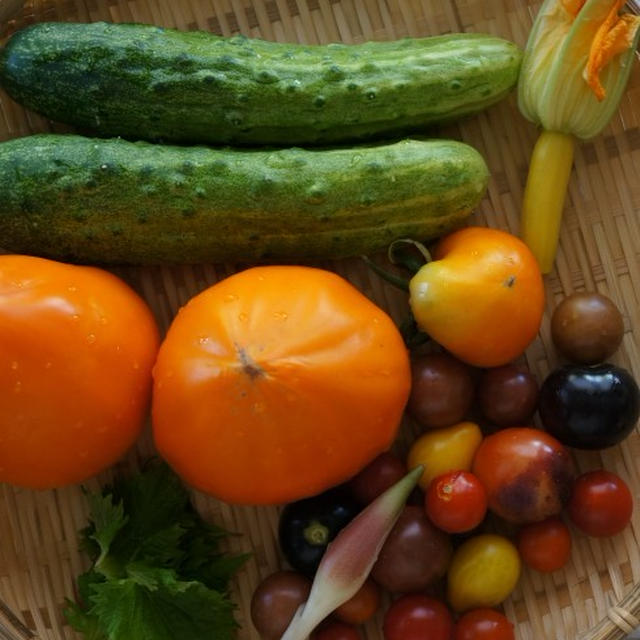 紫蘇と茗荷風味の夏野菜サラダ